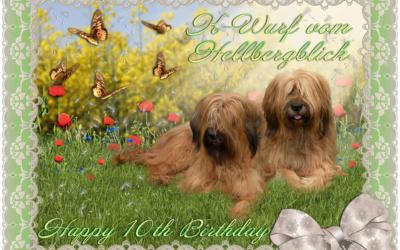 Happy Birthday K-Wurf vom Hellbergblick